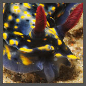 Sea Slugs Photos